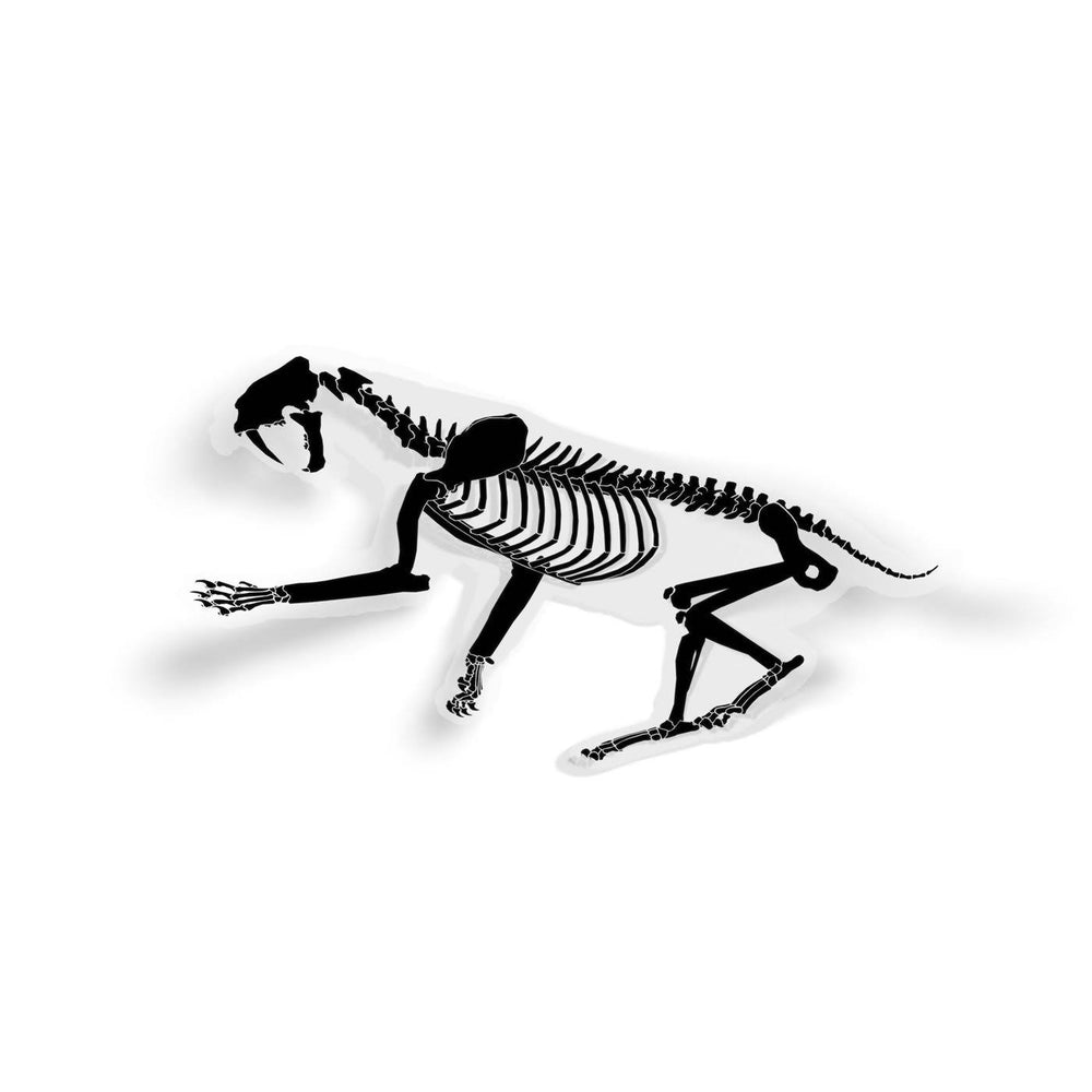 Smilodon Fossil Saber-Toothed Cat Sticker  - Permia