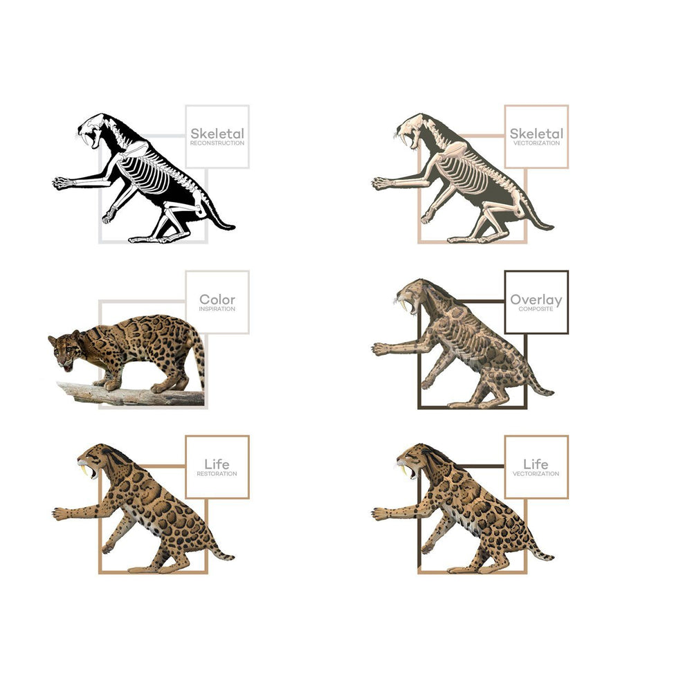 Smilodon Saber-Toothed Cat Art Evolution  - Permia