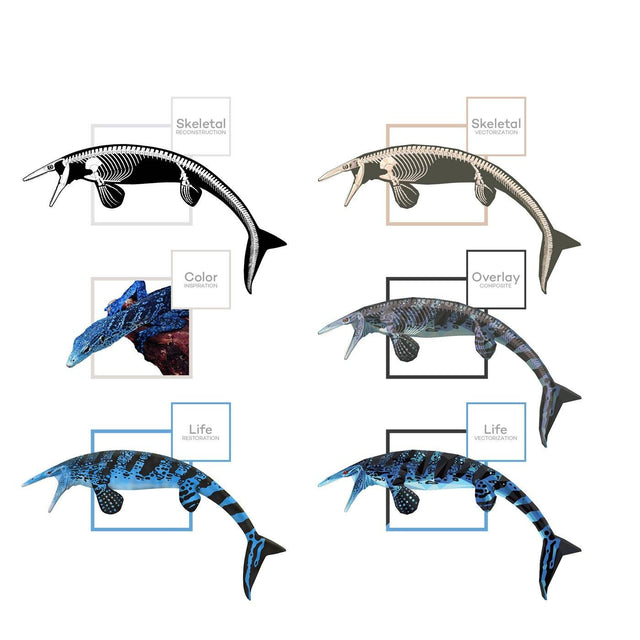 Tylosaurus Science Behind the Art Evolution Process Skeletal Life Permia