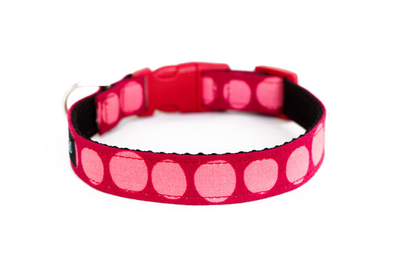 Buckle Dog Collar in Free Candy (red)