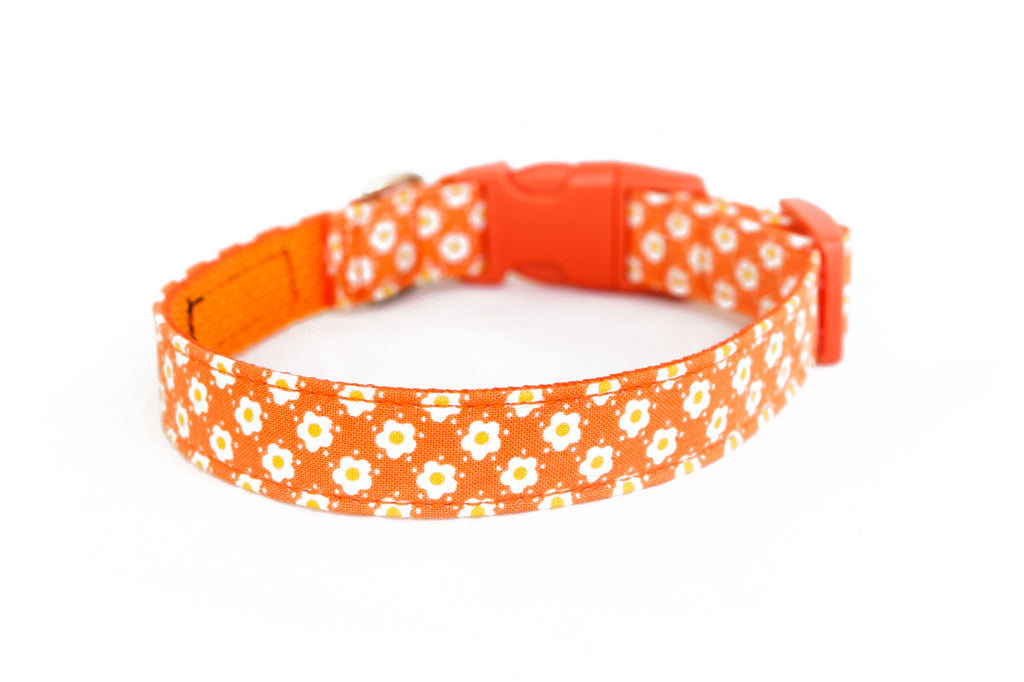 Buckle Dog Collar in Lucy