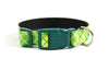 Buckle Dog Collar in Quigley (green)