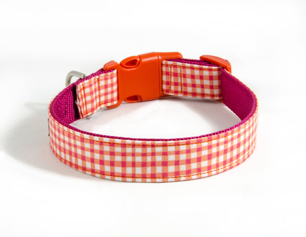 Buckle Dog Collar in Duck (Orange)