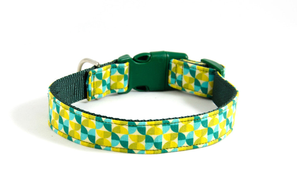 Buckle Dog Collar in Florence