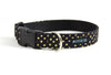 Buckle Dog Collar in Miss Otis
