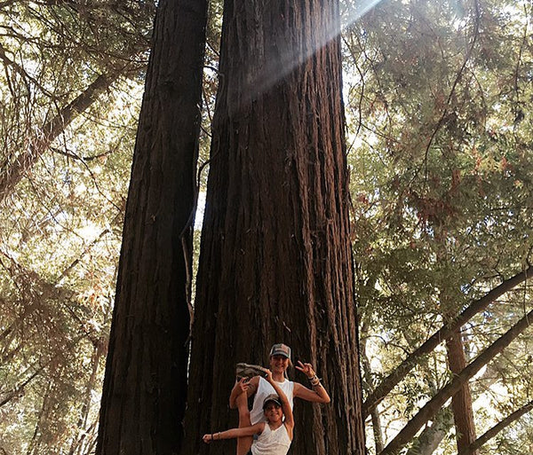 NORTHERN CALIFORNIA - PART 3 : THE SANTA CRUZ REDWOODS.