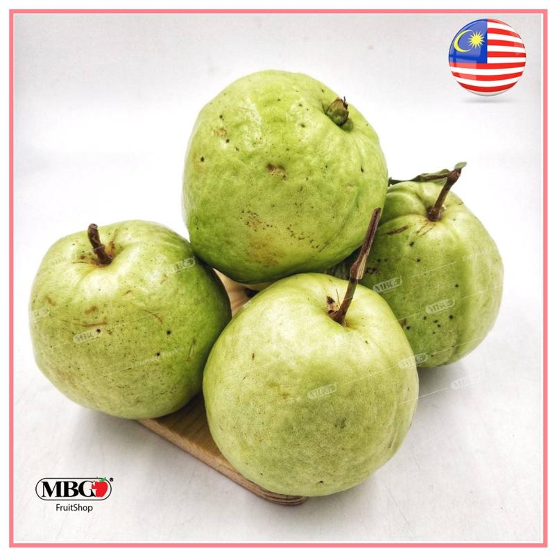 Malaysia Guava - (L)-Common Fruits-MBG Fruit Shop