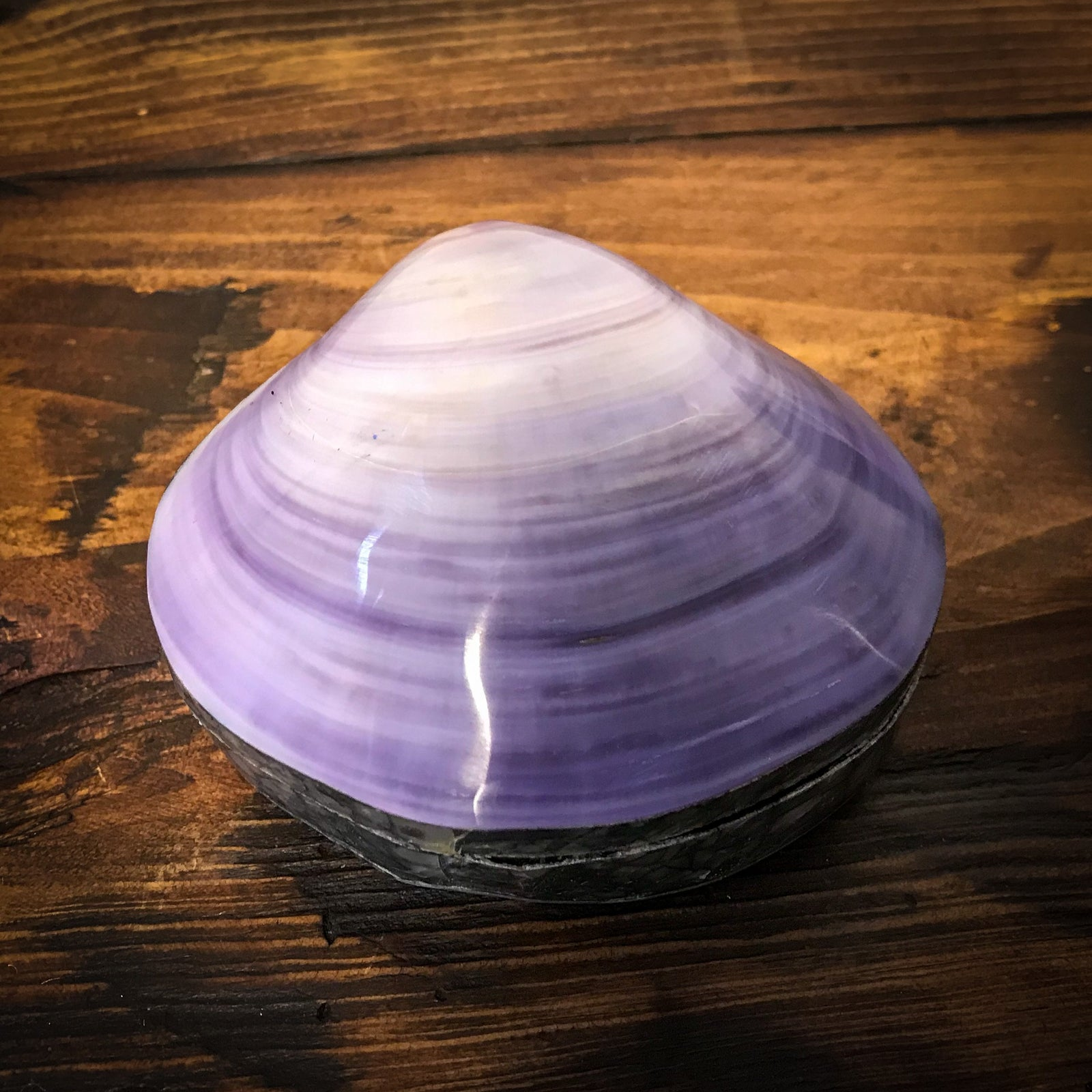 Small Sacred Shell Box