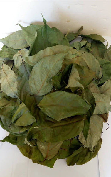 Banisteriopsis Caapi Leaves - Bulk African Trade