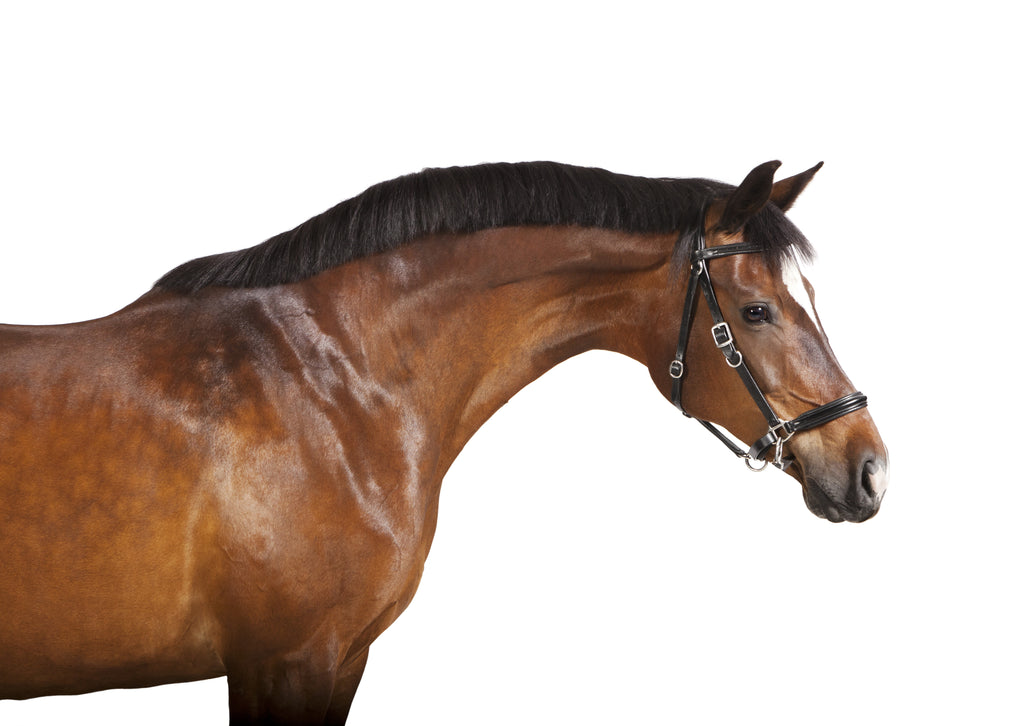 Are You Hurting or Helping Your Horse's Mane & Tail? - The 3 Do's and Don'ts of Mane & Tail Care!