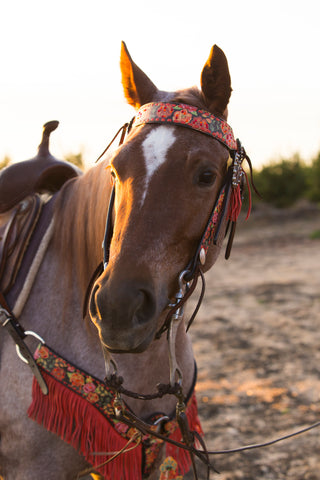 Black Coin Split Ear Headstall