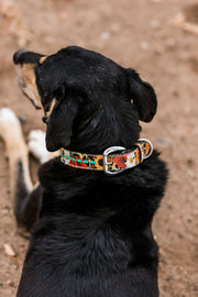Wild Cheetah Dog Collar