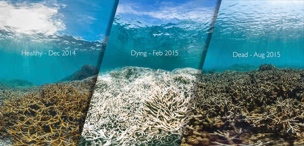 Coral Bleaching - Before-During-After
