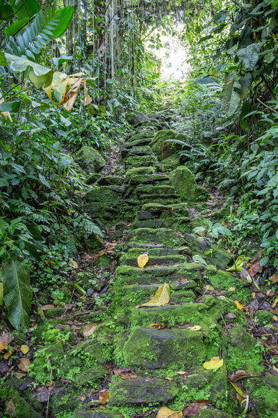 The Lost City - Steep Steps