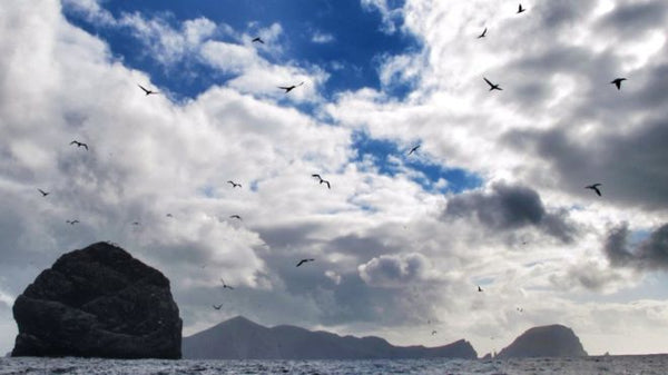 The St Kilda archipelago is home to one of the most significant sanctuaries for seabirds in the Atlantic Ocean