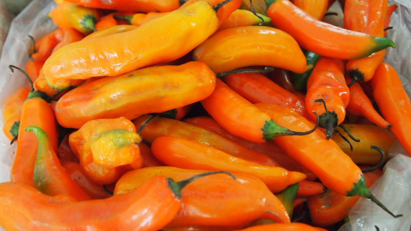Why the Aji Amarillo is so used in Peruvian Food?