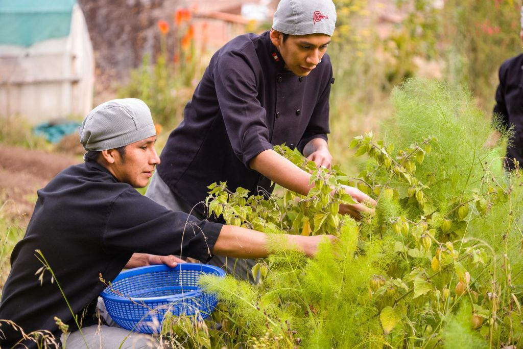 Peruvian Herbs: Get to Know Them and Love Them