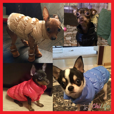 Padded Super Soft + Warm Winter Vest for Chihuahuas