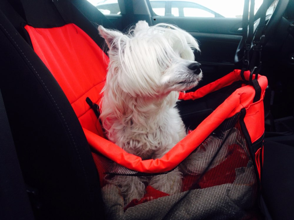 Small Dog Car Seat - NEW – ChiLife