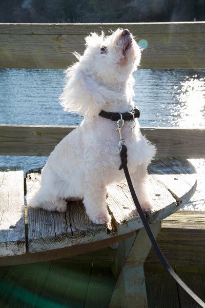 Pamperdoodle - Leather leads & collars - Natural