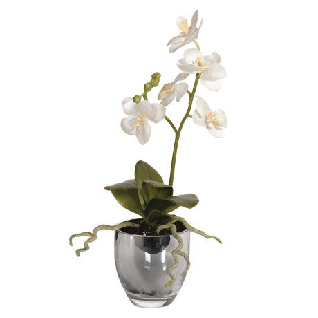 White baby orchid - Unique Gifts & Interiors