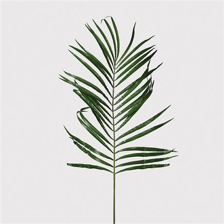 Green Areca Palm Leaf