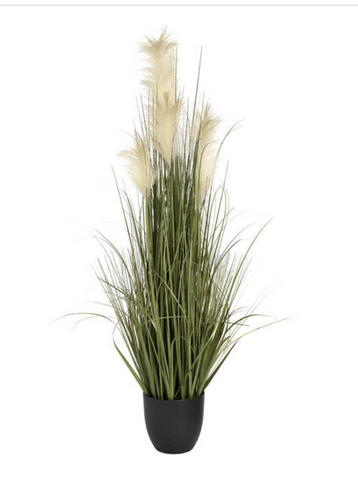 Pampas Grass Bush