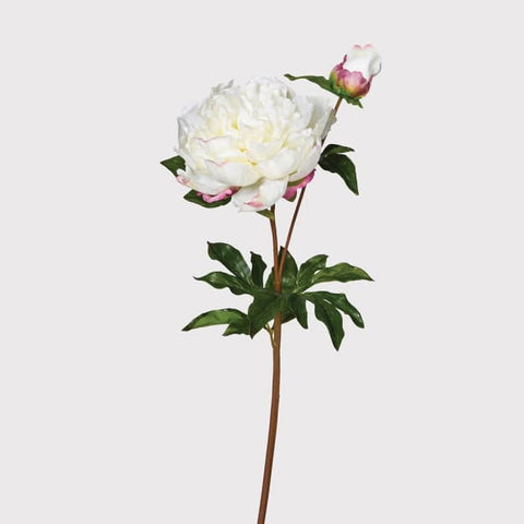 White Real Feel Open Peony With Bud
