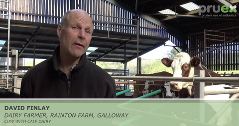 Reducing the need for antibiotics in a Cow & Calf dairy unit
