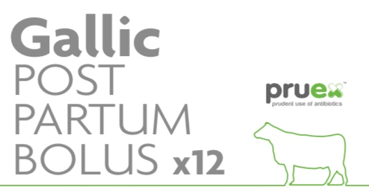 12 X Gallic Postpartum bolus