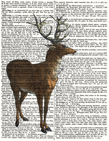 Dictionary Deer