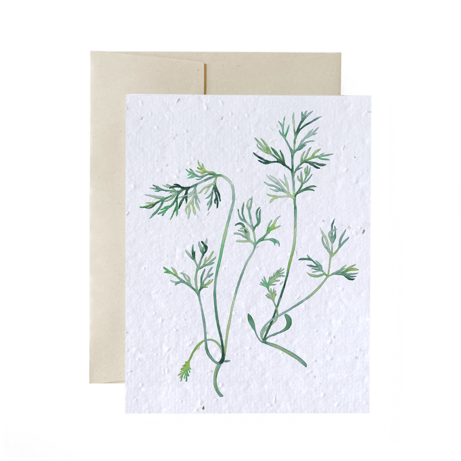 Dill Duo | Bundle