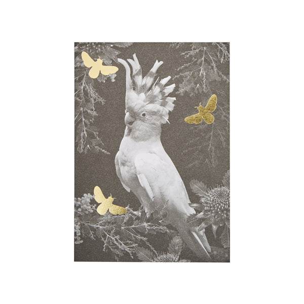 Greeting Card Set: Birds