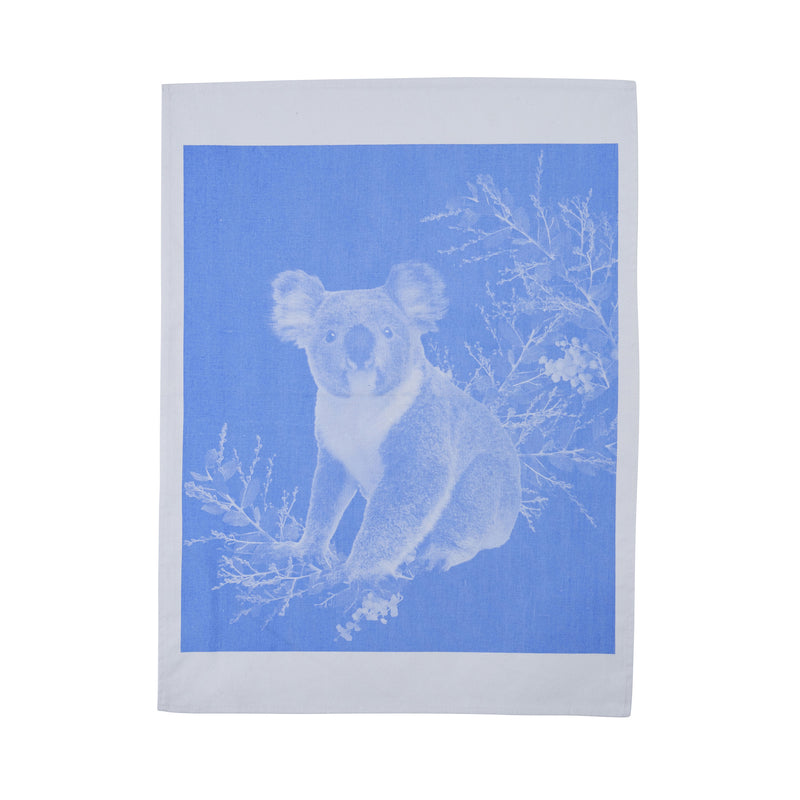 Koala Light Blue Cotton
