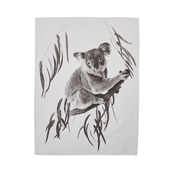 Koala Gum Black Cotton