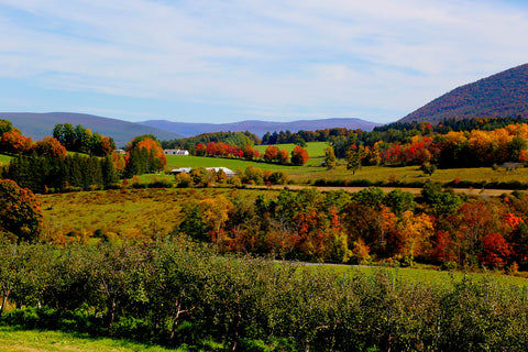 From late September to mid-October, you can immerse yourself in the fall colors as you trek through some of the most bucolic hills and valleys in the country. Whether you're looking for antiques or adventure, there's no better time to visit Western Massachusetts.