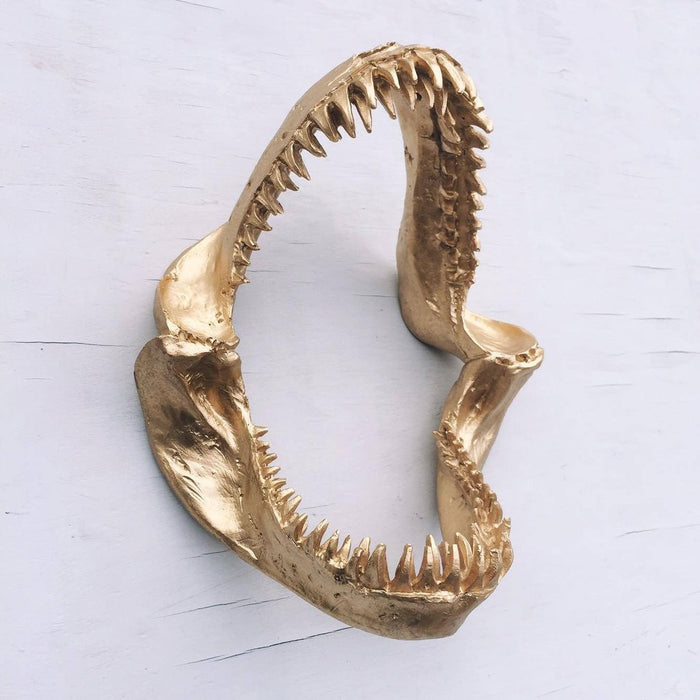 WHITEMOOSE Shark Skull Wall Mount- GOLD