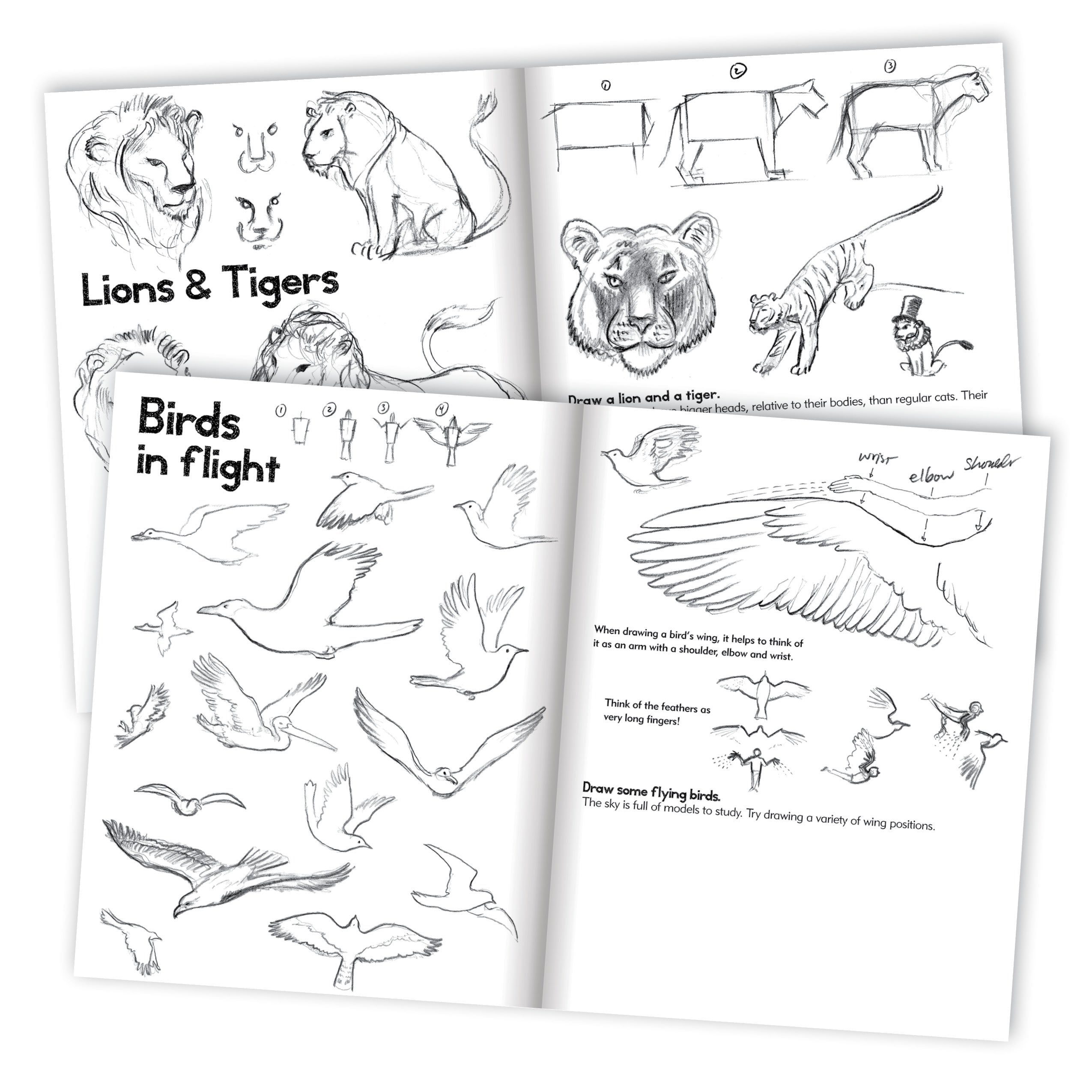 How to learn to draw on paper
