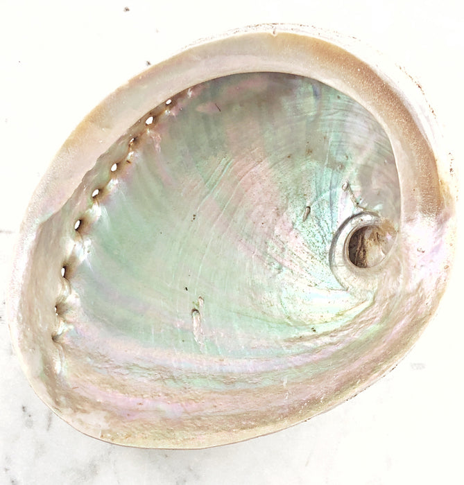 Medium Pāua(Abalone) Shell for cleansing $19