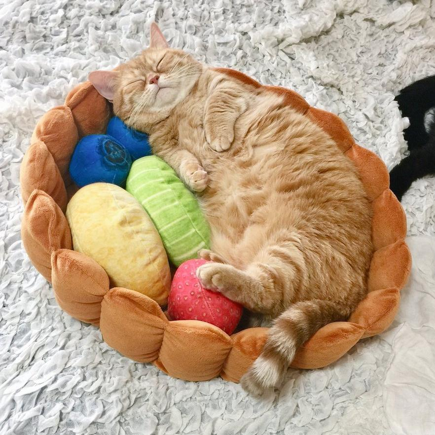 Cat Fruit Tart Bed