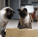 Fun Whack-A-Mole For Cats