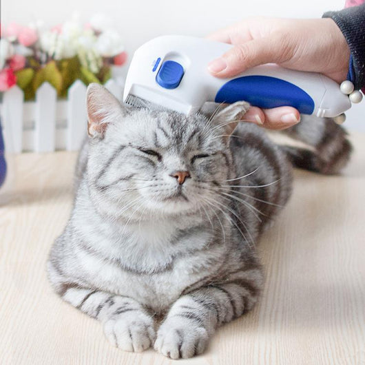 SALE] Electric Flea Comb For Cats