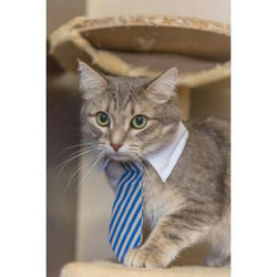 Striped Executive Business Cat Tie