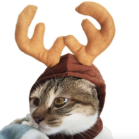 Cat Christmas Costumes
