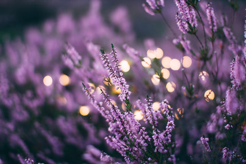 Lavender Scent helps to stimulate blood flow