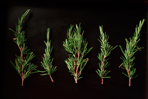 Rosemary is a stimulant that increases energy