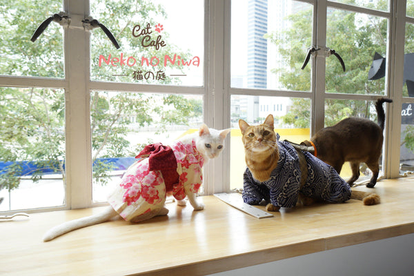 Singapore's First Cat Cafe: Neko No Niwa