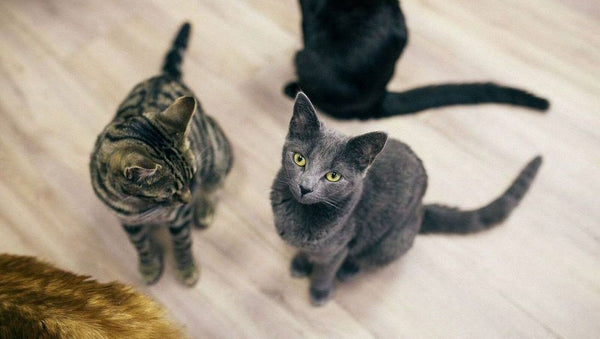 Feline Good Cat Cafe: A Dream Come True