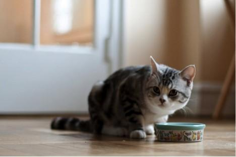 The Healthiest Foods for Your Cat