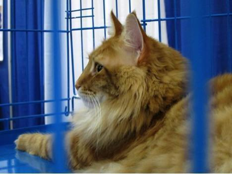 Why Cats Need No Kill Animal Shelters